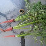 Gardening 2012 - 115_2814.JPG