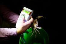 Actividad de censo de jueyes. Scanner para verificar la informacion del cangrejo.