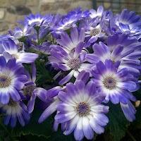 primavera-luminasioIMAG0216.jpg