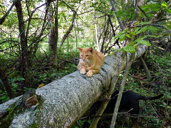 cat on a log