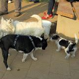Kleinhundegruppe Mittwoch 17.30 Uhr - DSC_0034.JPG