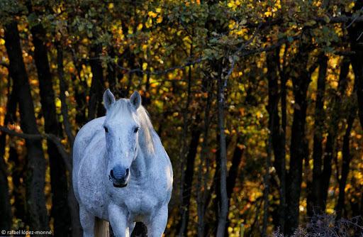 Cavalls a Montcortès.Pirineus. Baix Pallars, Pallars Sobirà, Lleida