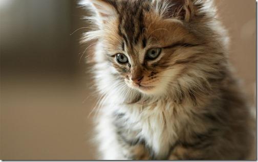 22 fotos de gats (28)