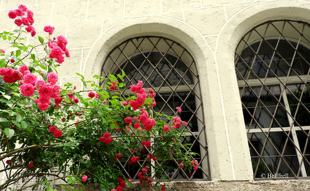 [Rosenfenster+2%5B3%5D]