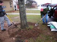 Digging around the tree