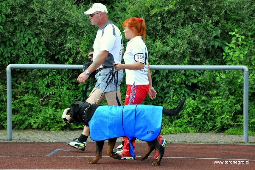 Toronegro Rottweiler Hodowla rotweilerów szczenięta szczeniaki Toro Negro adrk