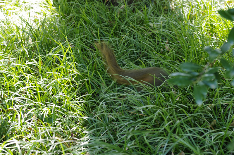 10-26-14 Dallas Arboretum - _IGP4291.JPG