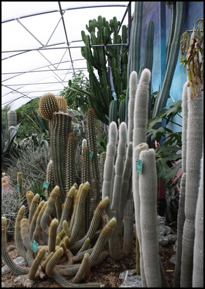 Cacti in the hot and spiky room at the World Garden