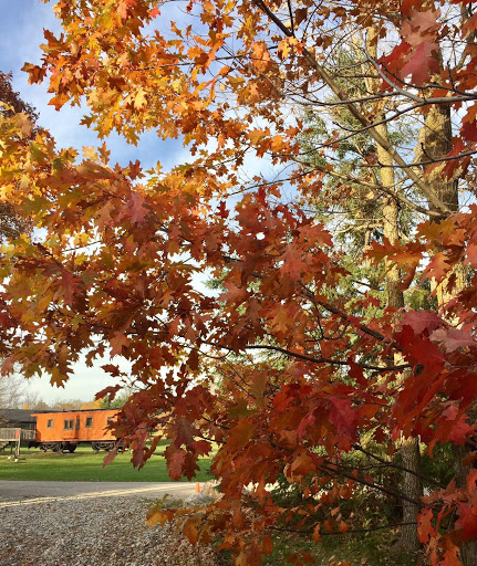 Oak trees holding on to fall color over the weekend