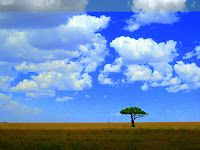 Serengeti Landscapes