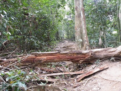 タマンヌガラのジャングル