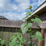 Gardening 2010, Part Three - 101_3845.JPG