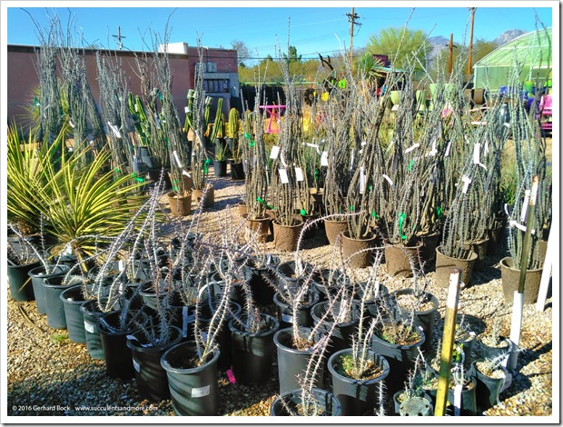 151230_Tucson_Mesquite-Valley-Growers_0031