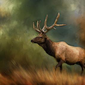 Bull Elk by Rich Reynolds - Digital Art Animals ( elk, alaska, digital art, art, oil painting,  )
