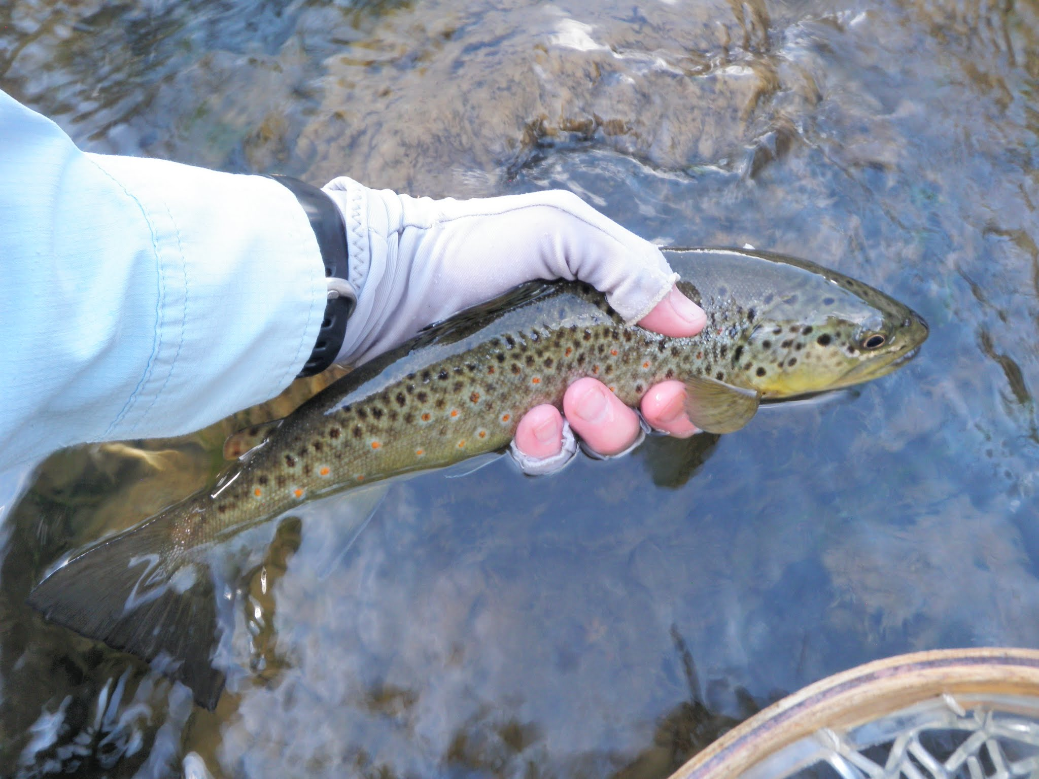 Conejos river 07 17 2016 dave weller 39 s fly fishing blog for Best trout fishing near me