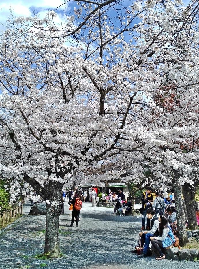 19 京都 嵐山渡月橋 賞櫻 櫻花 Saga Par 五色霜淇淋 彩色霜淇淋