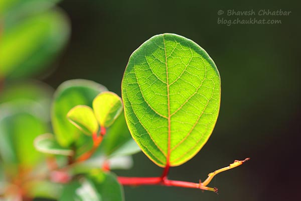 Macro photo of a small leaf with different shades of green with sunlight on it
