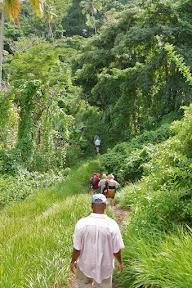 Hiking trail from Mt. Carmel Falls, Grenada