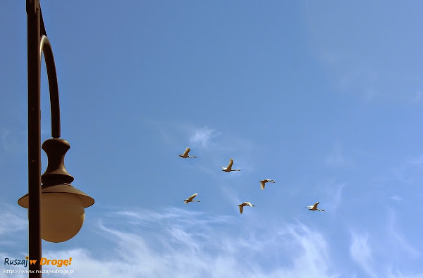 Łeba - czas lecieć