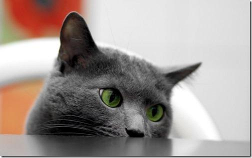 22 fotos de gats (2)