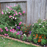 Gardening 2011 - 100_7305.JPG