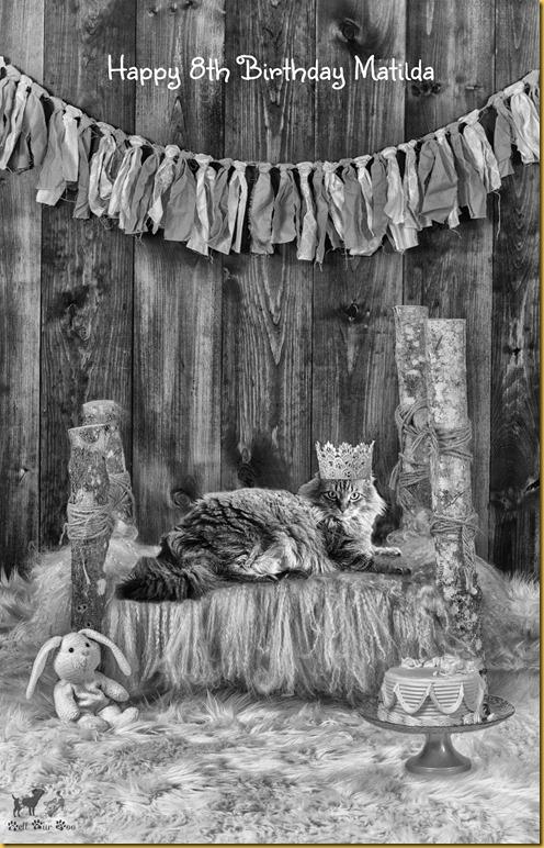 Matilda Birthday B&W(©Bell Fur Zoo)