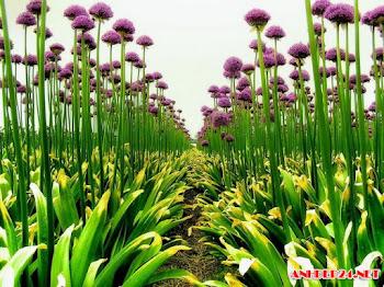 10 Hình hoa đẹp để làm hình nền