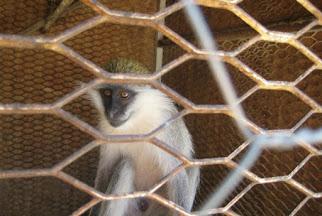 Petrol Ofisi arkası Hayvanat Bahçesi - Batman-Mala - 10150236479717885.jpg