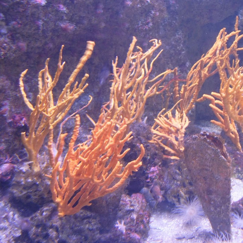 Aquarium_15.jpg