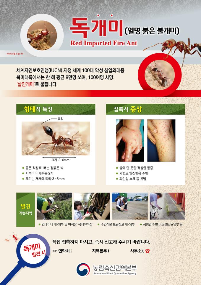 독개미 살인개미 붉은 불개미