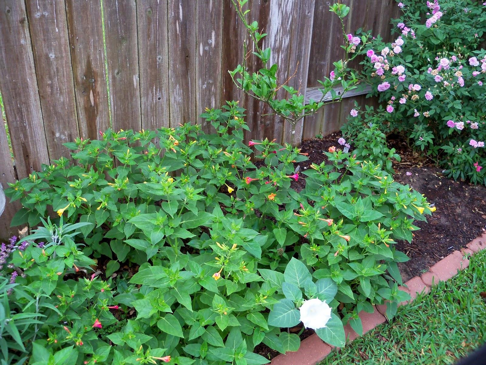 Gardening 2014 - 116_1812.JPG