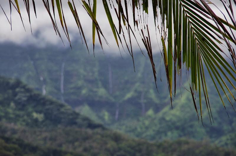 06-26-13 National Tropical Botantial Gardens - IMGP9442.JPG