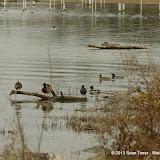 01-26-13 White Rock Lake - IMGP4351.JPG
