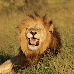 Zuid Afrika Addo Elephant Park