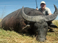 water_buffalo_hunting_7_large.jpg