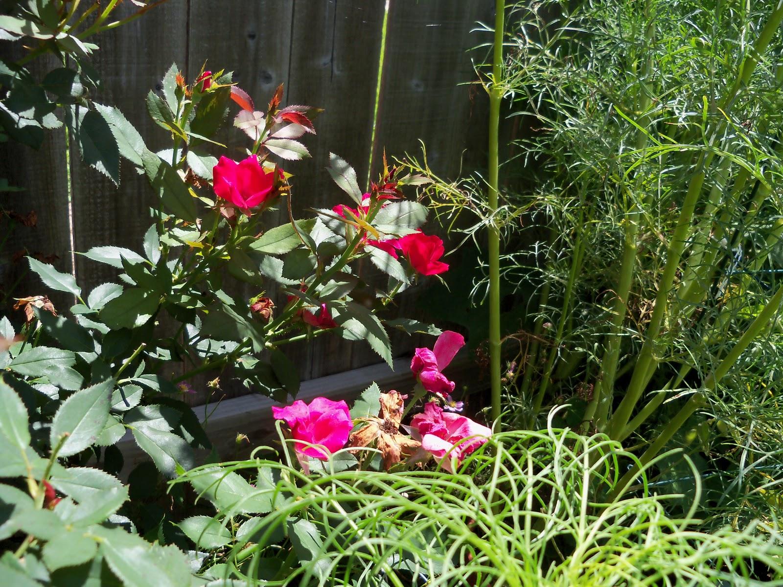 Gardening 2010, Part Three - 101_4450.JPG