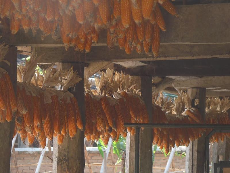 Chine.Yunnan.Damenlong -Galanba-descente Mekong - Picture%2B1574.jpg