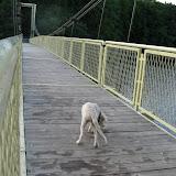 Goldenek na moście wiszącym (14.07.2008r.)
