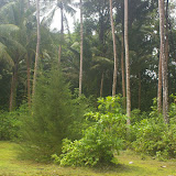Pulau Mantanani (Sabah, Malaisie, Bornéo), 28 juillet 2011. Photo : J.-M. Gayman