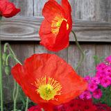 Gardening 2011 - 100_7104.JPG