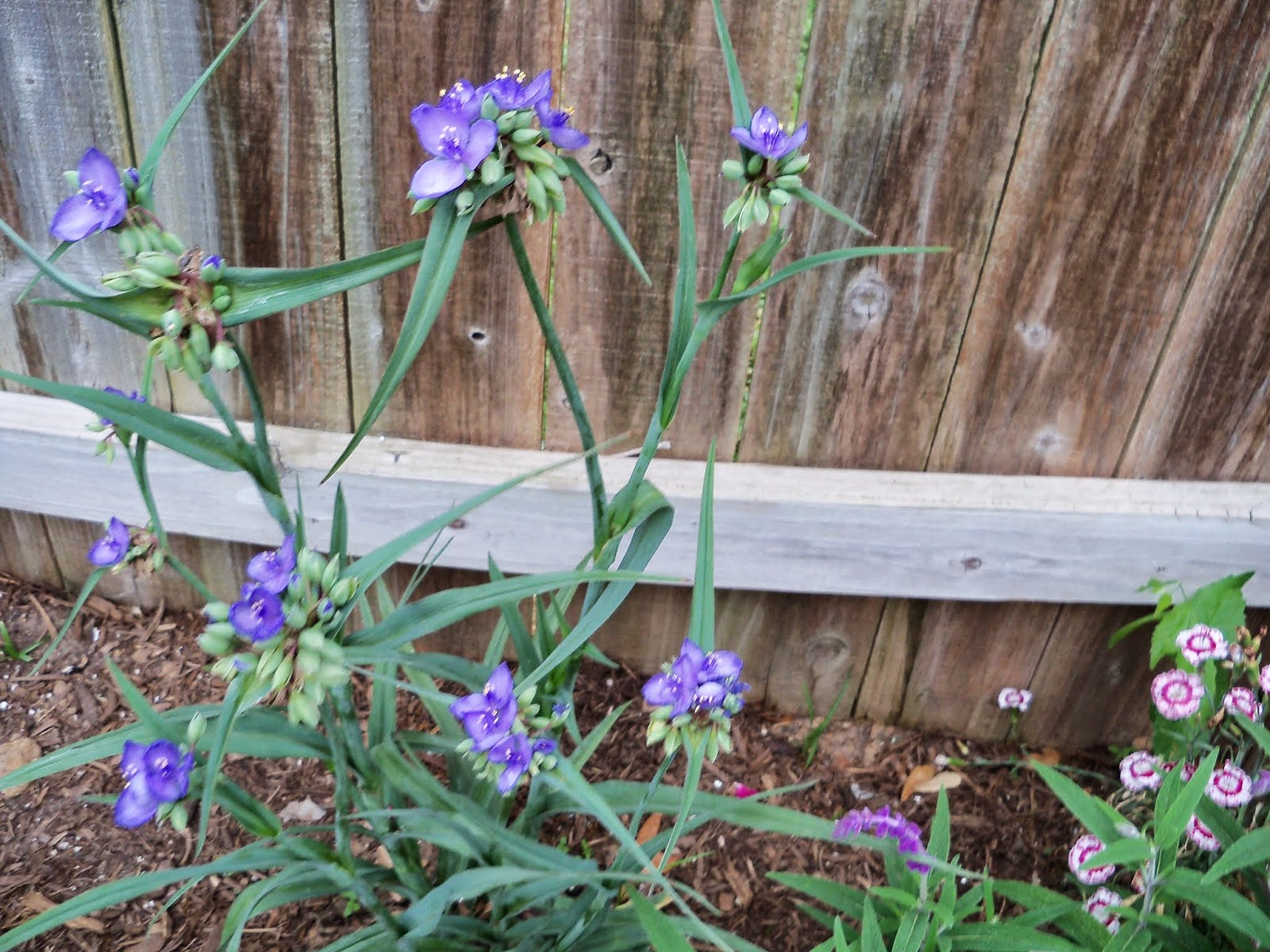 Gardening 2014 - 116_1497.JPG