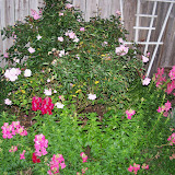 Gardening 2012 - 115_1262.JPG