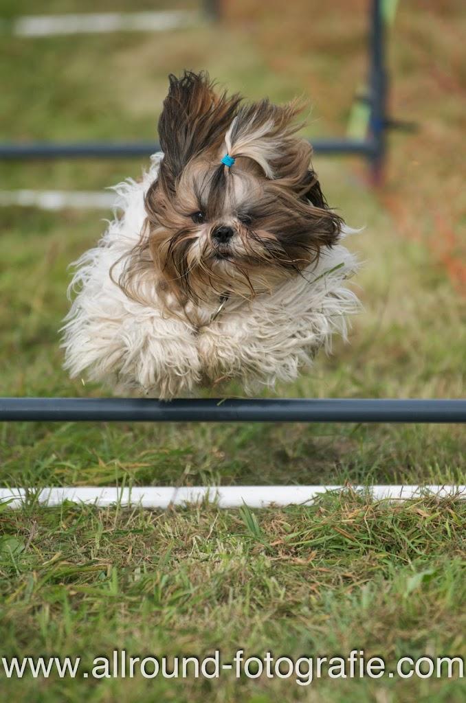 Huisdierreportage Hondendag Uden Dierendag (4 oktober 2008) - 17