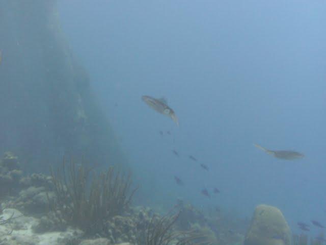 Bonaire 2011 - PICT0055.JPG