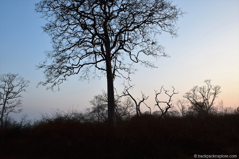 Sunrise at Bandipur Tiger Reserve | Bandipur Safari #wildlife