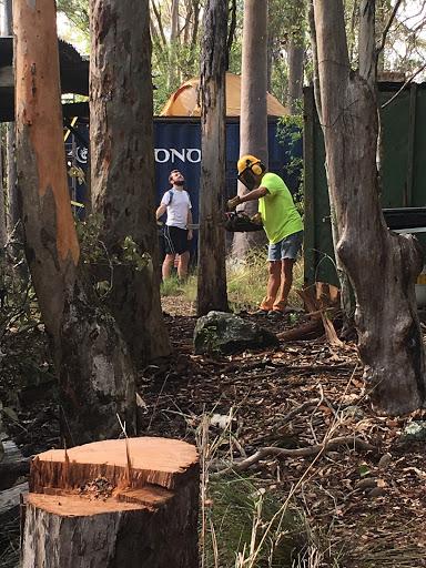 trees-standing-dead-timber-2017-03-2-08-34.jpg