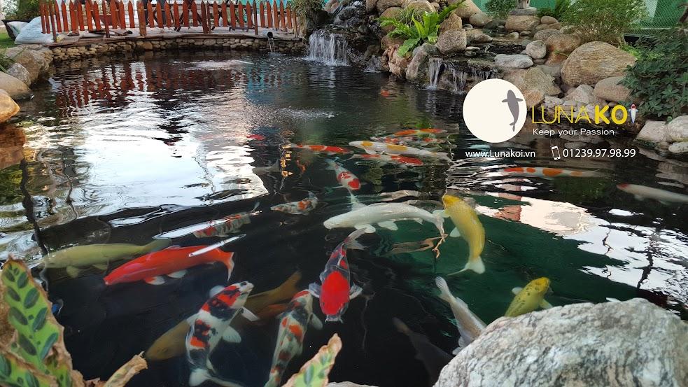 hồ cá chép nhật