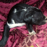 Delilah @ 3 1/2 weeks