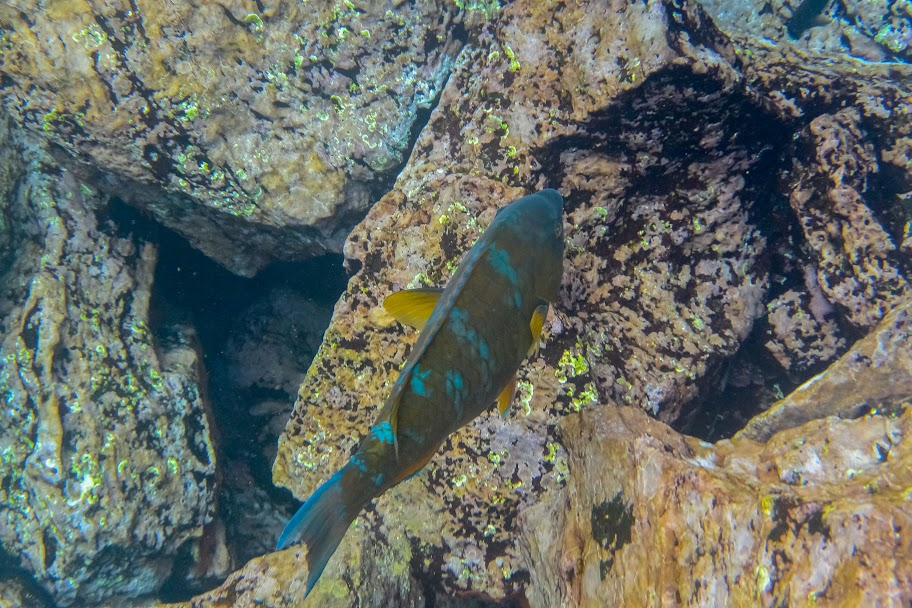 galapagos - Galapagos_FB_2-44.jpg