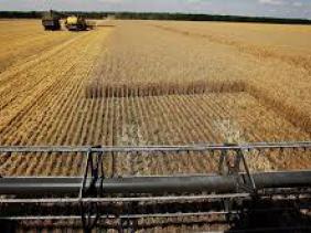 Céréales : la Russie dépasse les USA comme premier producteur de blé
